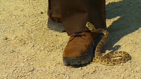 rattler boot